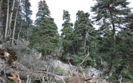 La Junta formaliza el último trámite para pedir que Sierra de las Nieves sea Parque Nacional