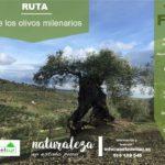 Ruta de los olivos milenarios en Alozaina, 18 febrero