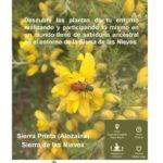 Ruta y taller de etnobotánica en Sierra Prieta