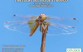 Ruta para conocer las libélulas del río Turón