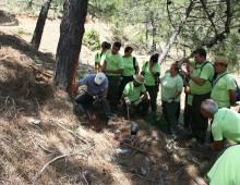 La Sierra de las Nieves trata de recuperar el viejo oficio de resinero